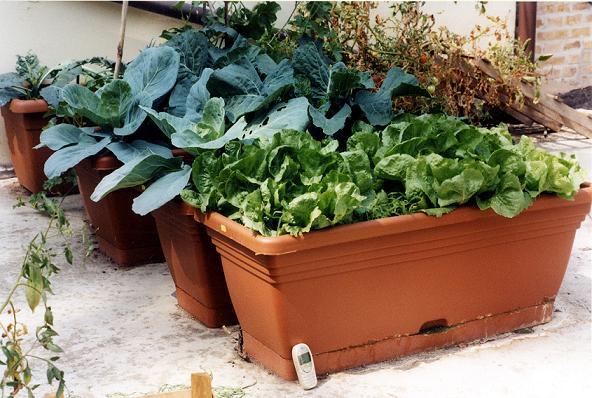 Come coltivare l orto fai da te sul balcone di casa for Orto sul terrazzo fai da te